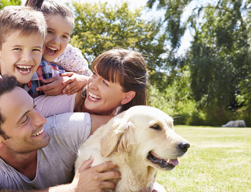 4 Helpful HVAC Tips for Pet Owners